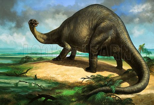 Apatosaurus, herbivorous sauropod dinosaur of the late Jurassic Period. Original artwork.