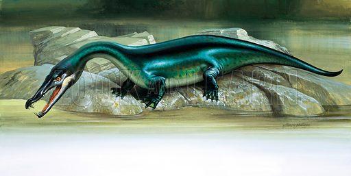 Nothosaur. Original artwork.