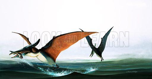 Pteranodon catching a fish.  Original artwork.