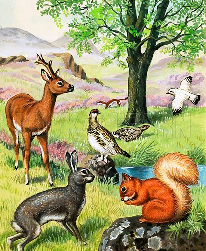 Assorted animals. Original artwork for Jack and Jill (10 Sept 1983).