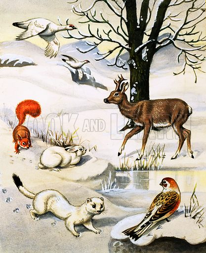 Assorted animals in the winter. Original artwork for Jack and Jill (10 Sept 1983).