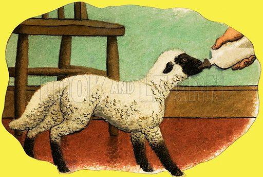 Lamb being fed milk. Original artwork (L&L Book 81).
