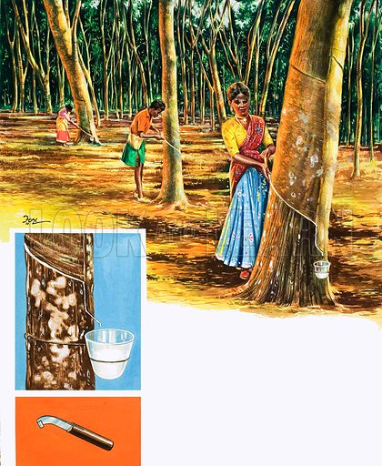 Obtaining rubber from trees. Original artwork from Treasure no. 230 (10/6/67).