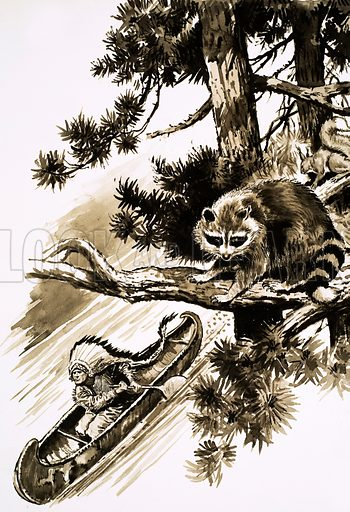 Hiawatha. A raccoon sits in a tree above Hiawatha in his canoe. Original artwork from Look and Learn no. 36 (22 September 1962).