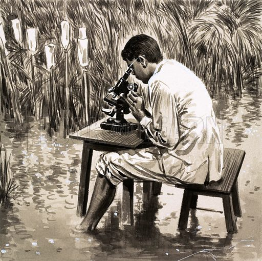The Struggle Against Hunger. A United Nations scientist working in an experimental rice paddy in India. Original artwork from Look and Learn no. 125 (6 June 1964).