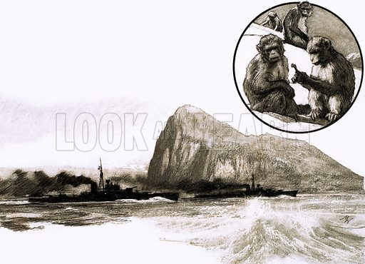 So That's Why... Gibraltar Still Has Its Barbary Apes. Original artwork from Look and Learn no. 245 (24 September 1966).