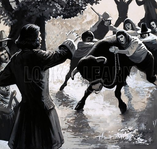 Men With a Mission: Britain Was His Parish. A group of disruptors tried to disrupt John Wesley's preaching by driving a bull into the crowd. The bull, however, had other ideas. Original artwork from Look and Learn no. 562 (21 October 1972).