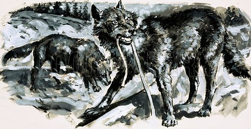 True Tales of the American West: The Railroad that was Eaten! A railway build in Washington state was destroyed by hungry wolves during the winter as they ate the rawhide used to tie down the sleepers. Original artwork from Look and Learn no. 484 (24 April 1971).