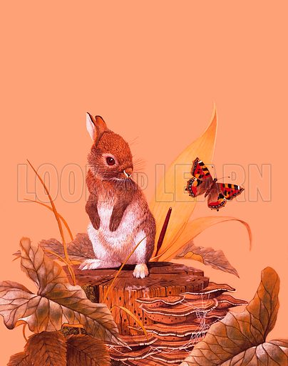 Baby rabbit. Original artwork for Look and Learn book 1976.