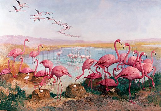 Pink flamingoes. Original artwork for Once Upon a Time.