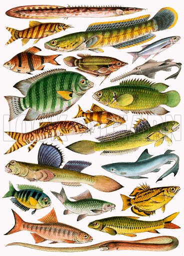 Freshwater fishes of the Empire – Indian.