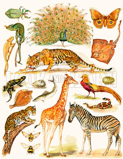 Assorted animals with interesing colouration.