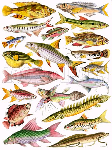 Fresh-water Fishes of the Empire – African.