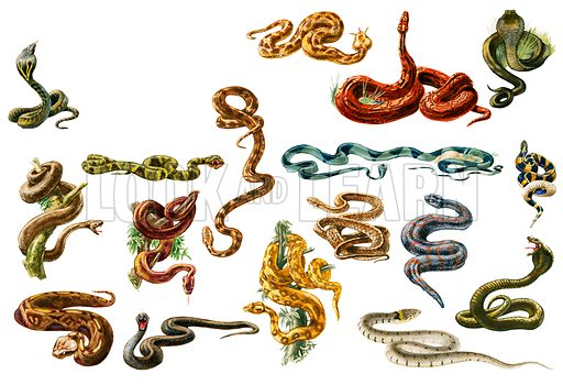 Snakes. Original artwork for Look and Learn Book for Boys.