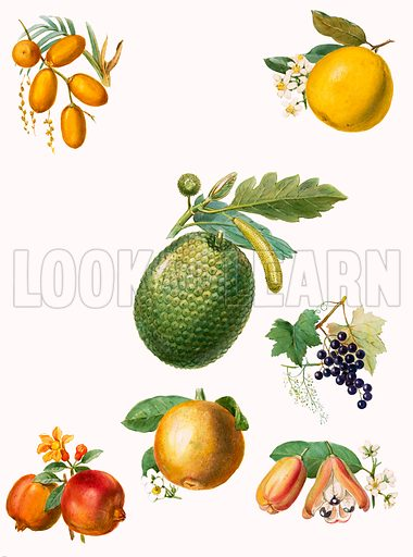 Tropical fruit.