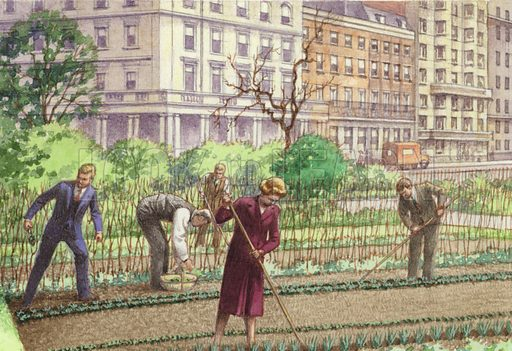 Dig for Victory. Programmes such as Radio Allotment broadcast direct from a piece of land in Park Crescent, near Broadcasting House, encouraged the public to grow as much of their own food as they could. From Look and Learn 1032 (19 December 1981).