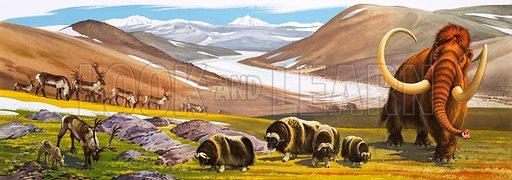 Prehistoric Animals: Reindeer, Musk Oxen, Mammoth.