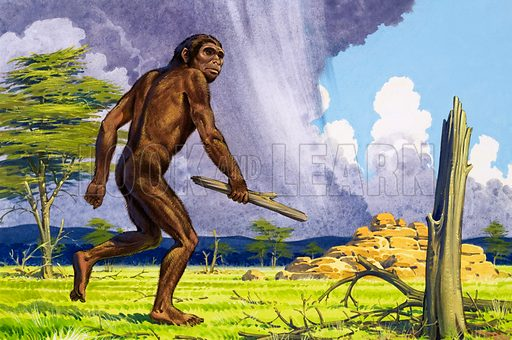 Ape man.