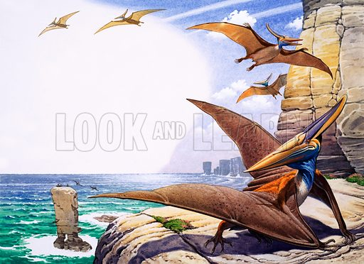 Prehistoric birds.
