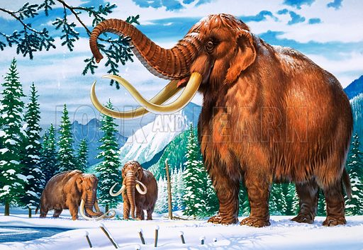 Mammoths in the snow.