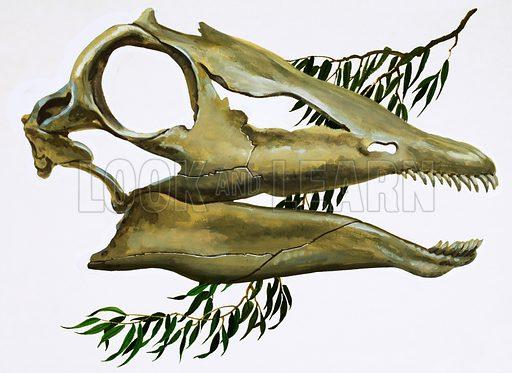 Diplodocus.