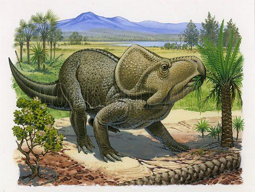 Proctoceratops.
