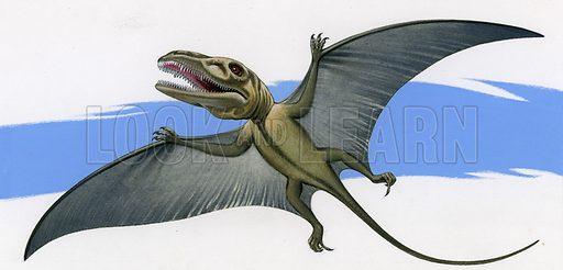 Dimorphodon.