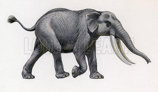 Palaeoloxodon Falconeri.