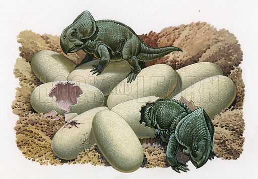 Young Proctoceratops hatching,  picture, image, illustration