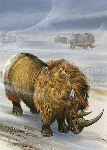 Wooly rhinoceros.