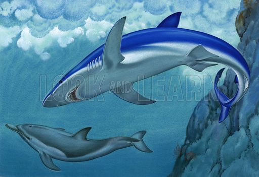 Blue shark and dolphin.