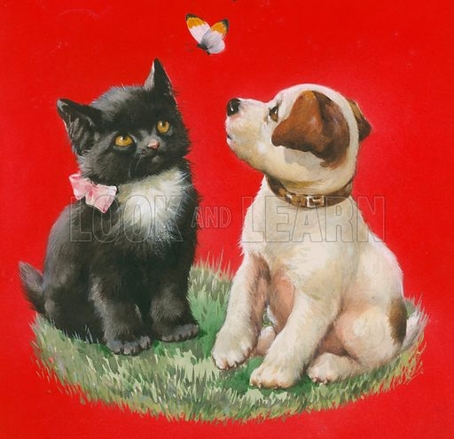 Cat, dog and butterfly.