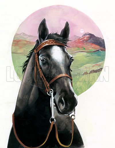 Black Beauty, picture, image, illustration