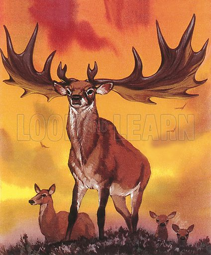 Giant elk. Professionally re-touched illustration.