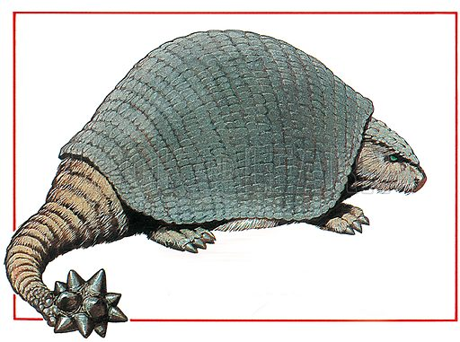 Doedicurus was a type of glyptodon and is related to the modern amadillo. It was, however, much bigger and much more fearsome in its appearance. Professionally re-touched illustration.