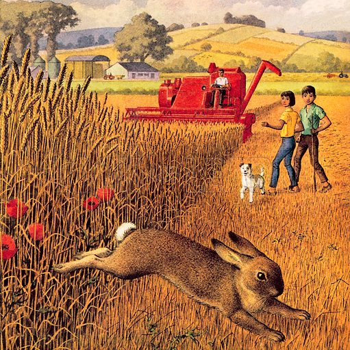Harvest time, picture, image, illustration
