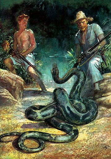 """The Arts: Swiss Family Robinson, the famous novel by Johann Wyss. """"The serpent raised his head and, darting on me a look of powerless anger, again let it fall. Fritz and I fired together …""""."""