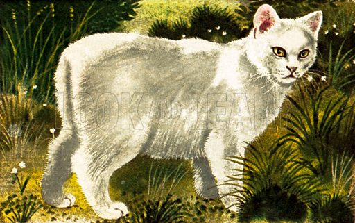 The Isle of Man, or Manx, cat. NB: Scan of small illustration.