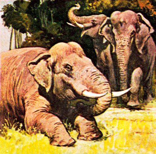 Elephants kneeling. NB: Scan of small illustration.