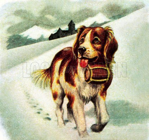 St Bernard Dog. NB: Scan of small illustration.