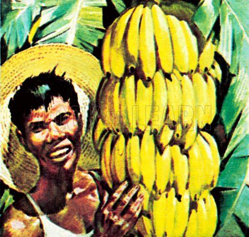 Bananas. NB: Scan of small illustration.