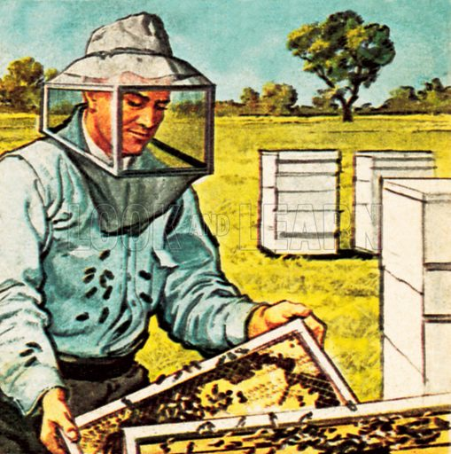 Bee keeper. NB: Scan of small illustration.