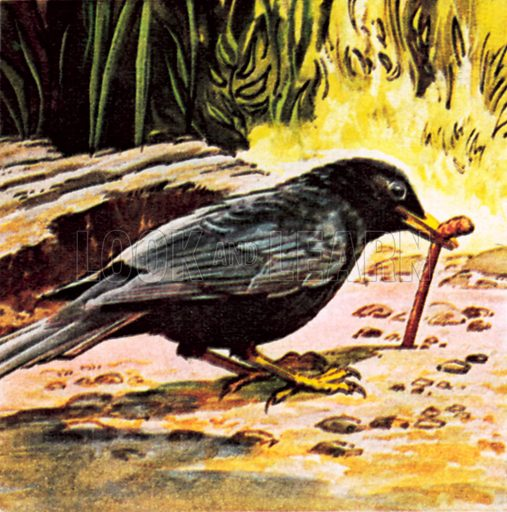 Early bird catches the worm. NB: Scan of small illustration.