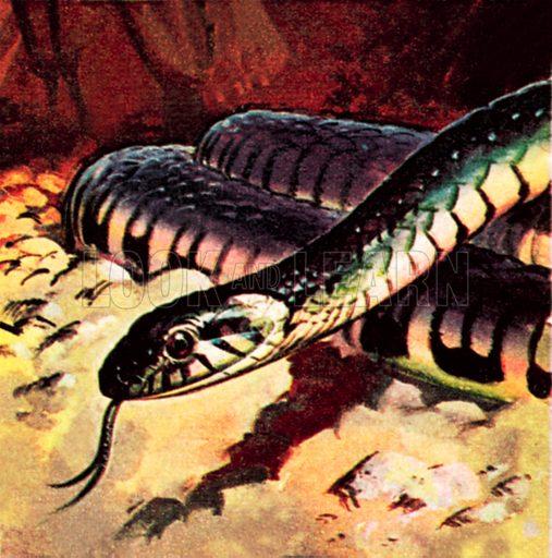 Snake. NB: Scan of small illustration.