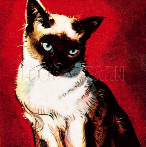 Siamese cat. NB: Scan of small illustration.