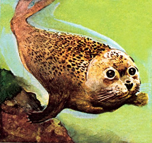 The Common Seal. NB: Scan of small illustration.