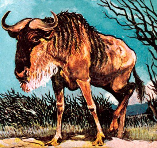Gnu or wilderbeast. NB: Scan of small illustration.