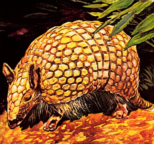 Armadillo. NB: Scan of small illustration.