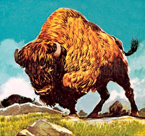 Bison. NB: Scan of small illustration.
