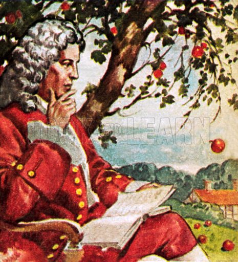 The theory of gravity: English scientist Isaac Newton watching apples fall from a tree, 17th Century. NB: scan of small illustration.